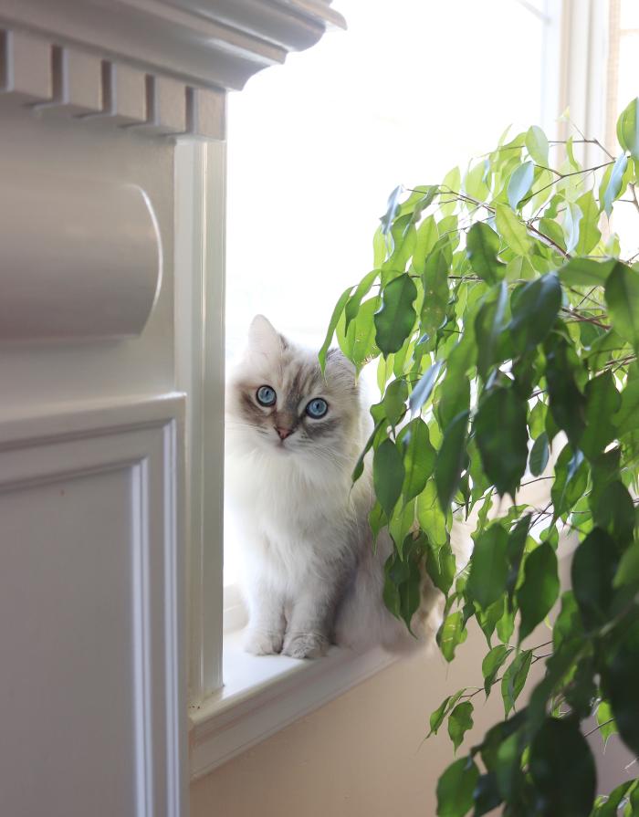 Rosie in the window